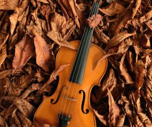 Violon couché sur des feuilles